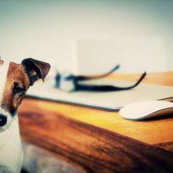 Afbeelding van een hond en kat die bij een bureau in de buurt staan.